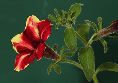 Bloemen zijn er om mooi te zijn – Eric Barbe