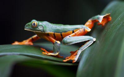Regi's Eye on Nature: een unieke voordracht door Regi Popelier op vrijdag 28 september 2018
