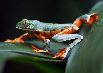 Costa Rica © Regi Popelier