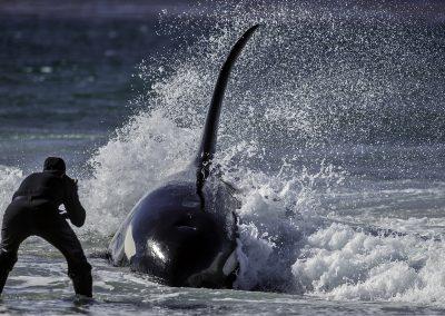 Falklands © Regi Popelier