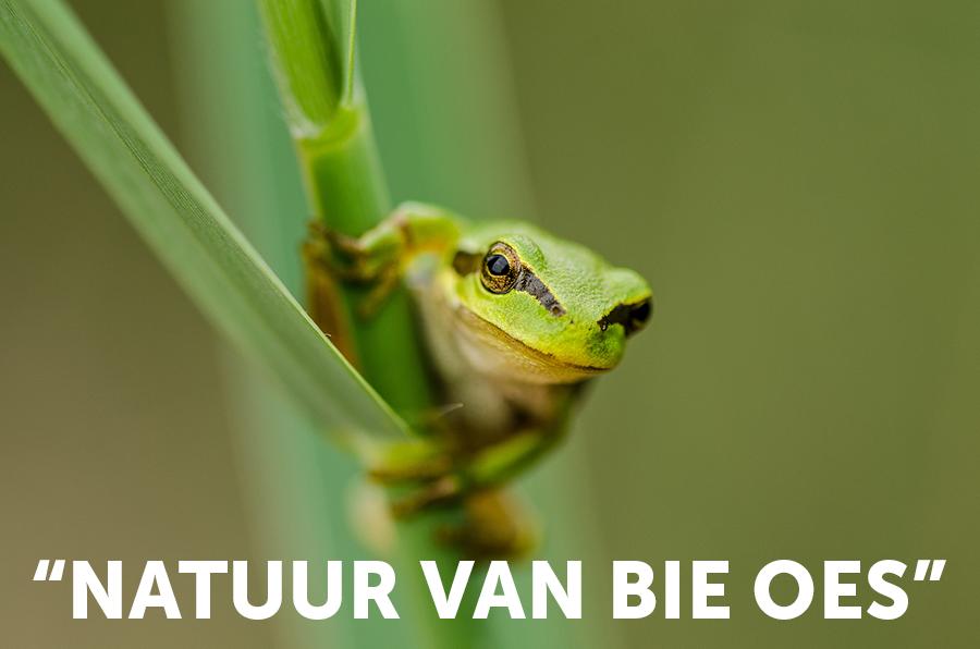 DZL_2019_Fototentoonstelling_Natuur-van-bie-oes_banner_Mailchimp